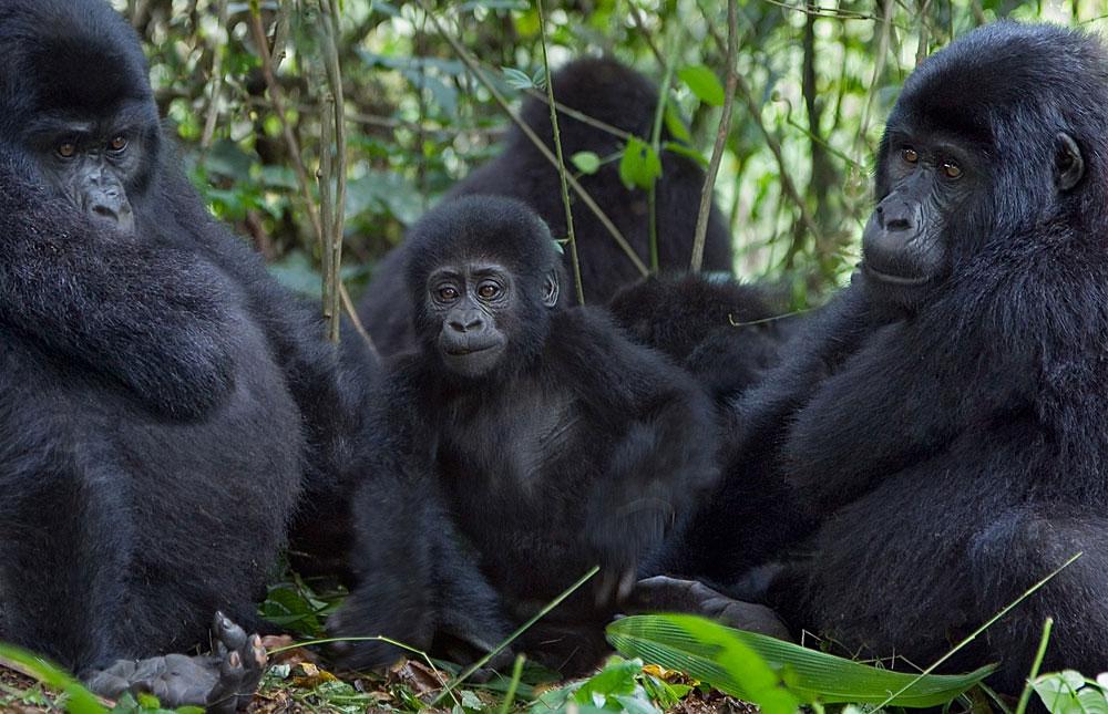 Most Beautiful Tourist Attractions in Uganda
