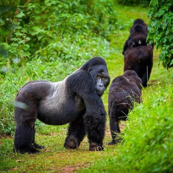Uganda among safest place to visit-Forbes Magazine
