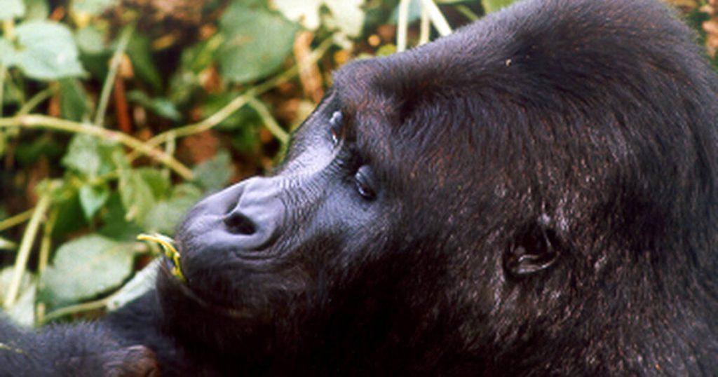 Uganda wild life conservation gets 1.6 billion shillings